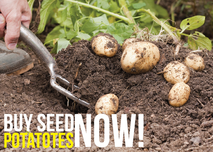 /seed_potatoes